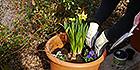 Neue Frühlingspflanzen im Sinnesgarten