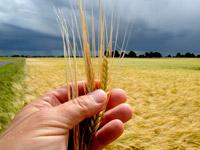 Der Weizen wächst nicht schneller, wenn man daran zieht - so wie alles Andere im Leben auch. Weitersagen!